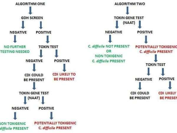Clostridium difficile Algorithm